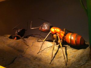the-annual-insects-exhibition-the-casinos-jewel